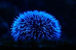bioluminesencse